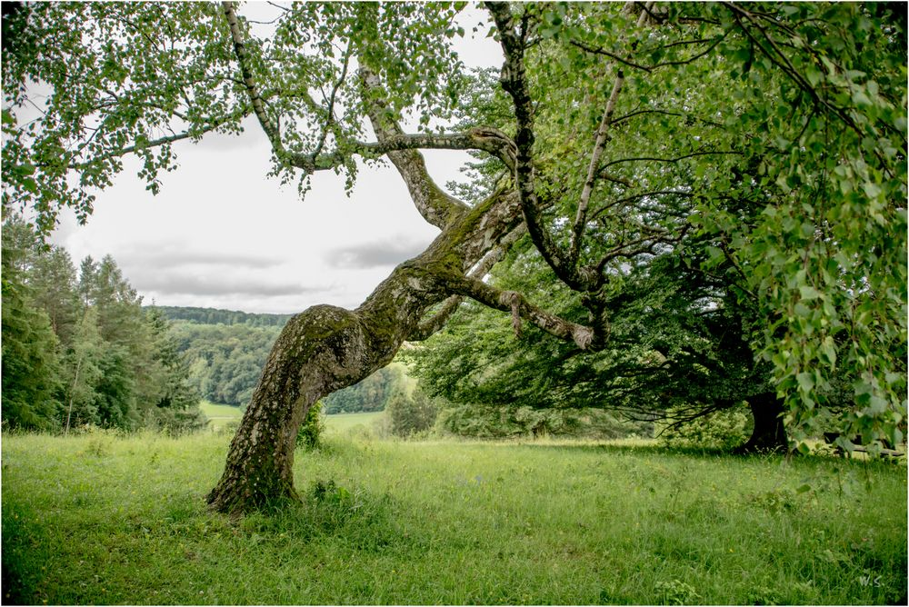 interessante Statik Foto & Bild   landschaft, lebensräume