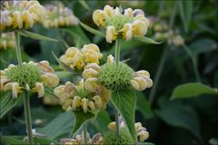 Natur Pilze Blumen