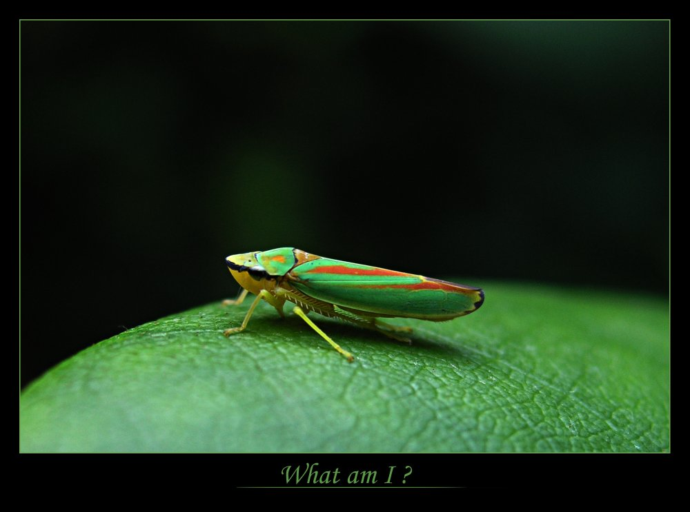 Interesting Beetle