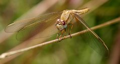 interview with a dragonfly