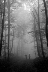 into the fog...