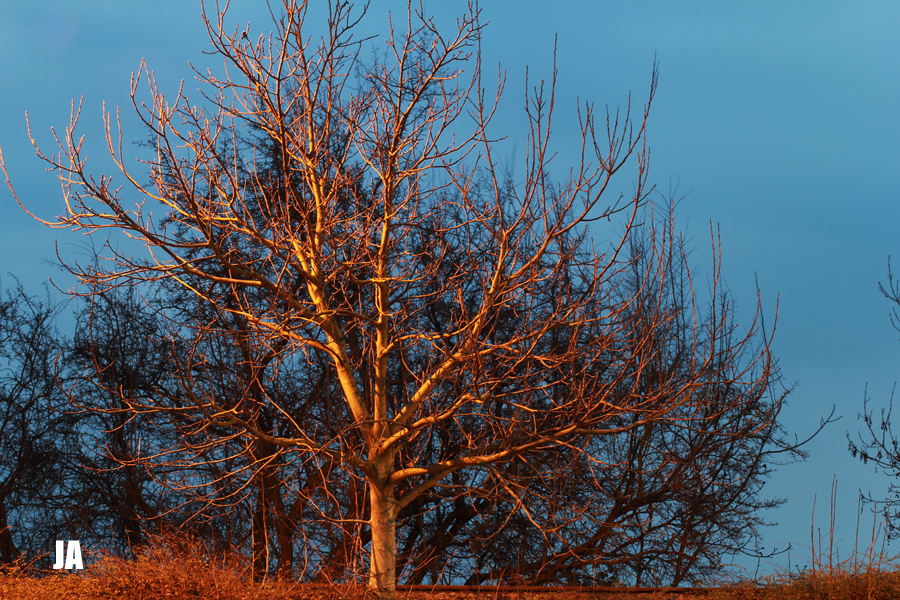 Into the tree...