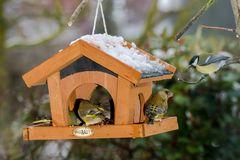 Invasion der Grünfinken