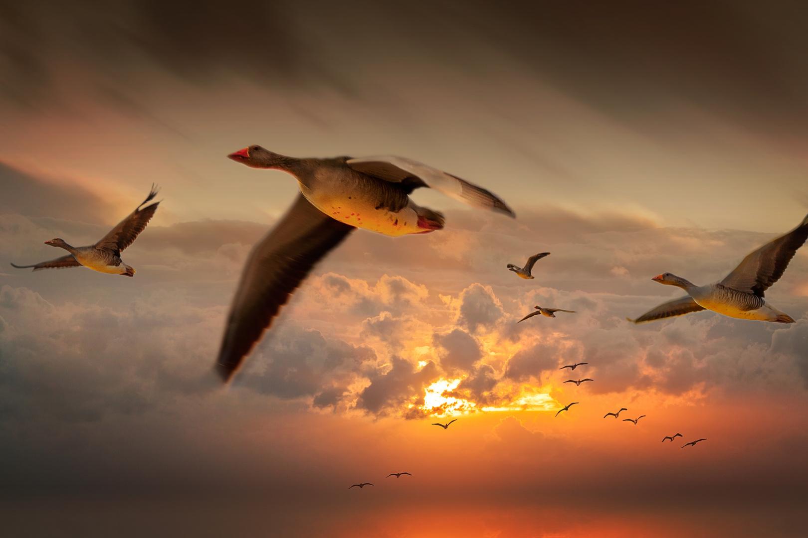 Invasion der Zugvögel