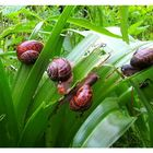 Invasion nach dem Regen .....