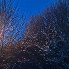 Inverno davvero#5