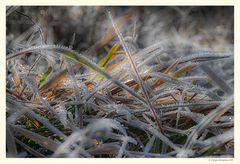 Inverno - Dettagli # 3