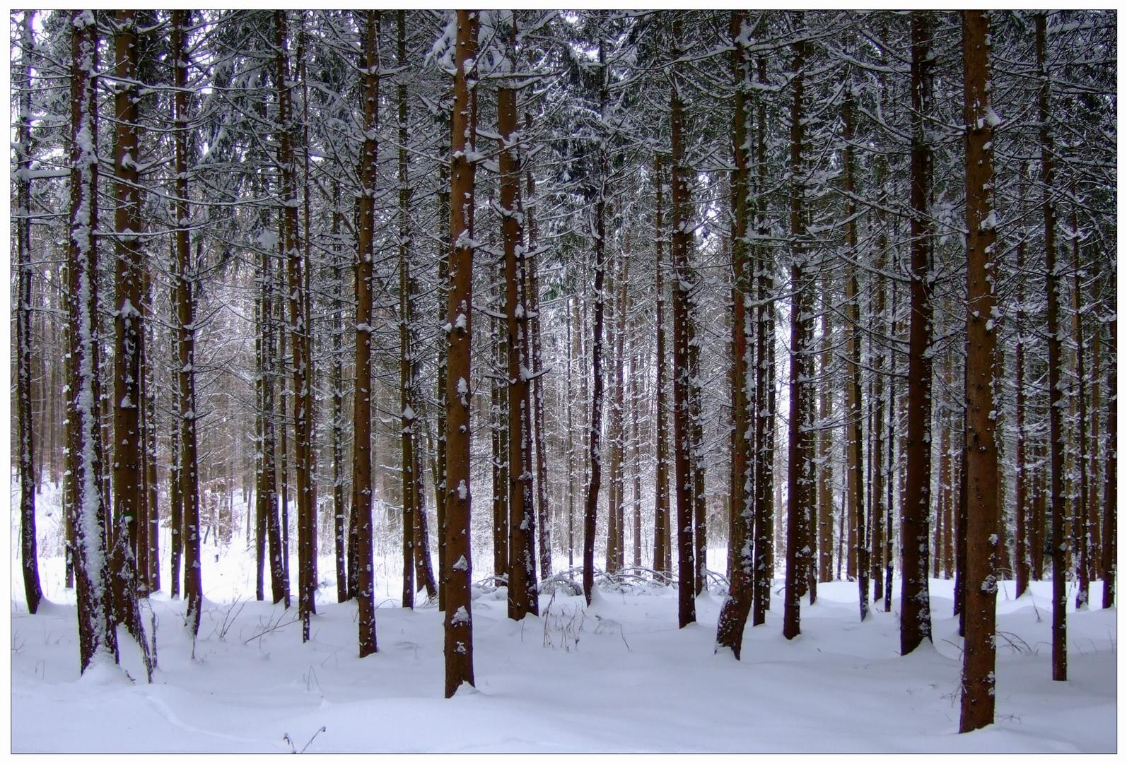Invierno en el bosque (winterlicher Wald)