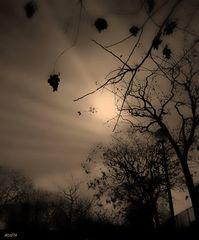 ....invierno en mi alma