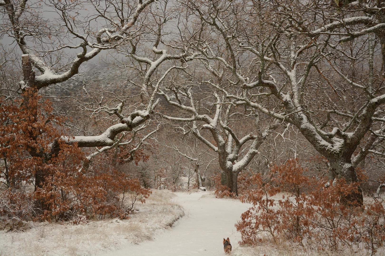 invierno21