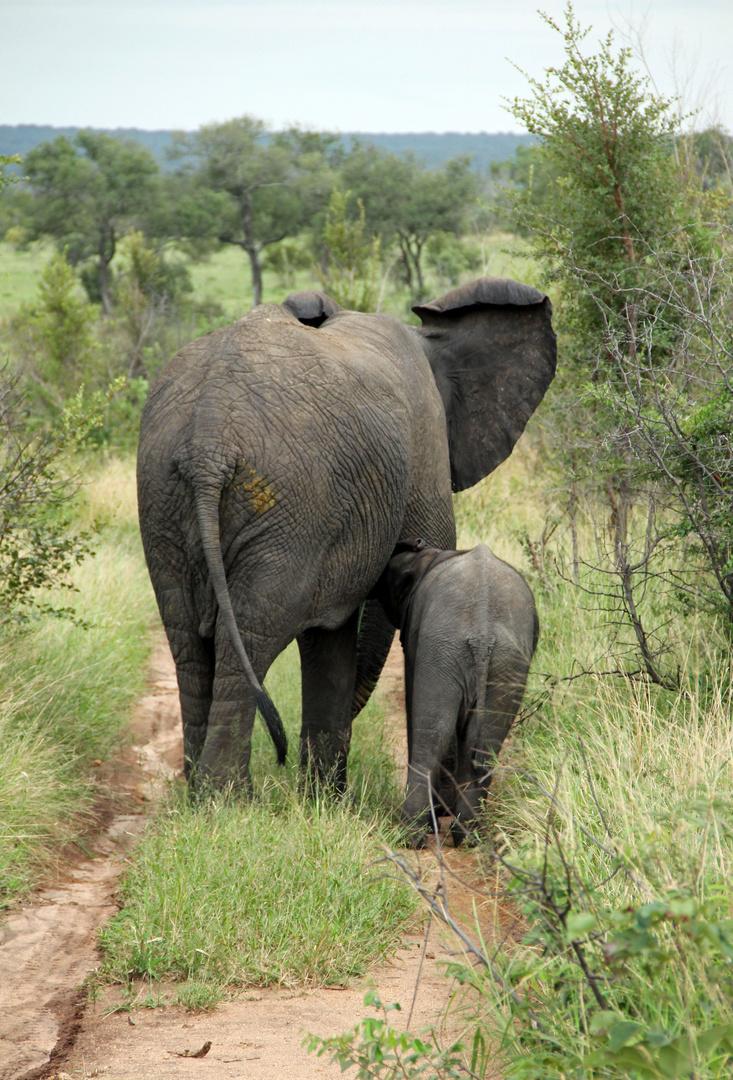 Inyati - Elefantenmutter mit Kind