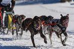 Inzell - Hundeschlittenrennen