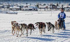 Inzell - Schlittenhunderennen