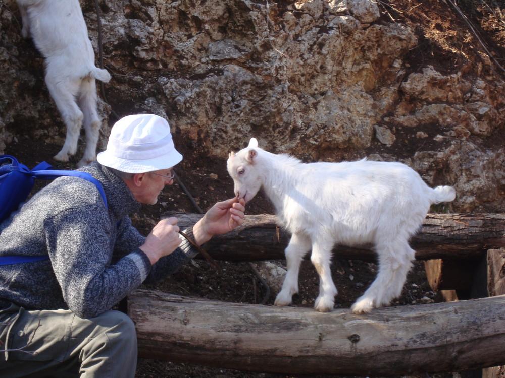 io e l'agnello