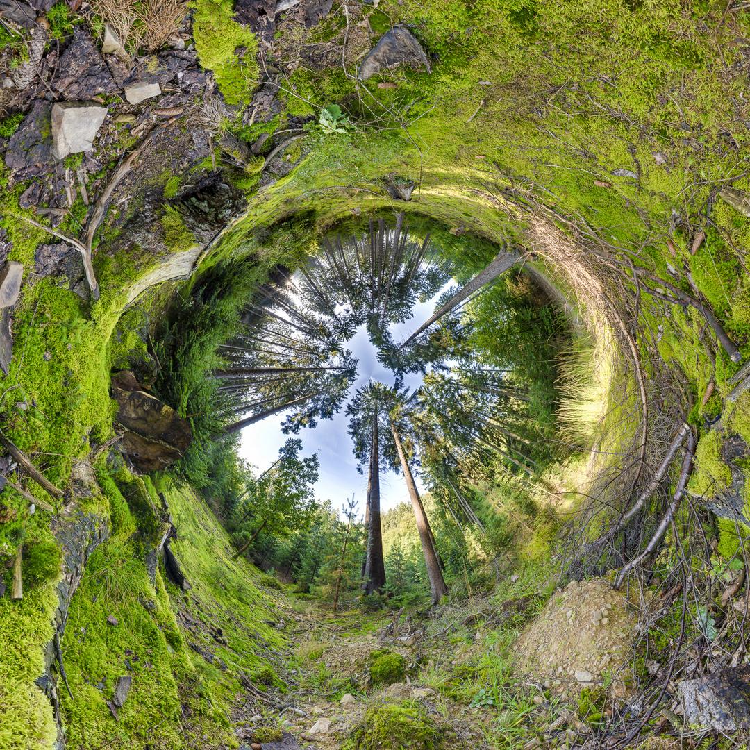 iPlanet - Trees I