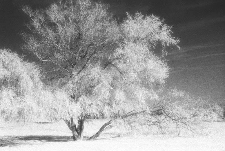 IR Baum