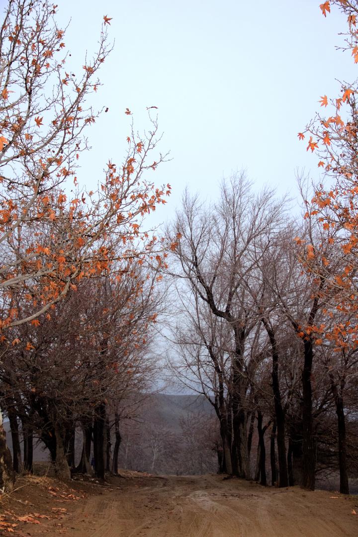 iran.karaj.baghstan