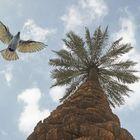 iraqi view