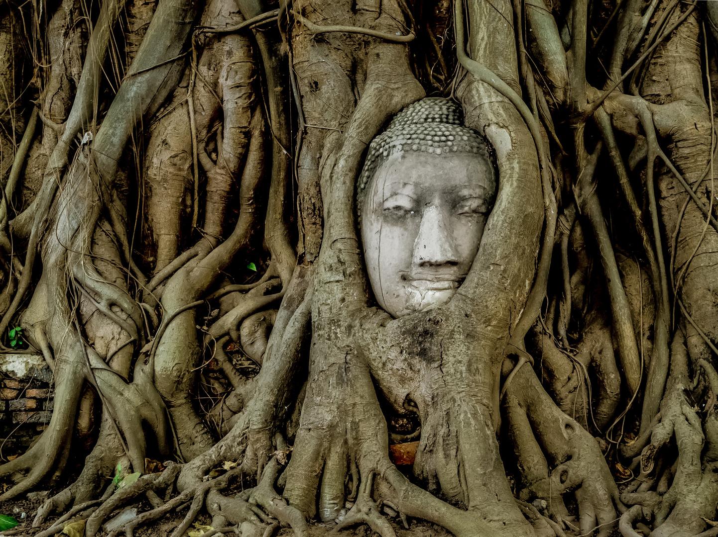 Irgendwann siegt der Baum