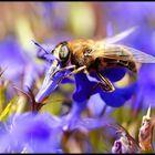 Irgendwann wird es Honig