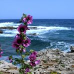 irgendwo der Küste