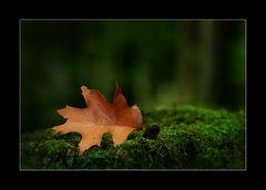 Irgendwo im Wald ...