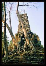 Irgendwo innerhalb Angkor Thoms
