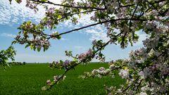 Irgendwo zwischen den Blüten hat sich ein Besucher versteckt