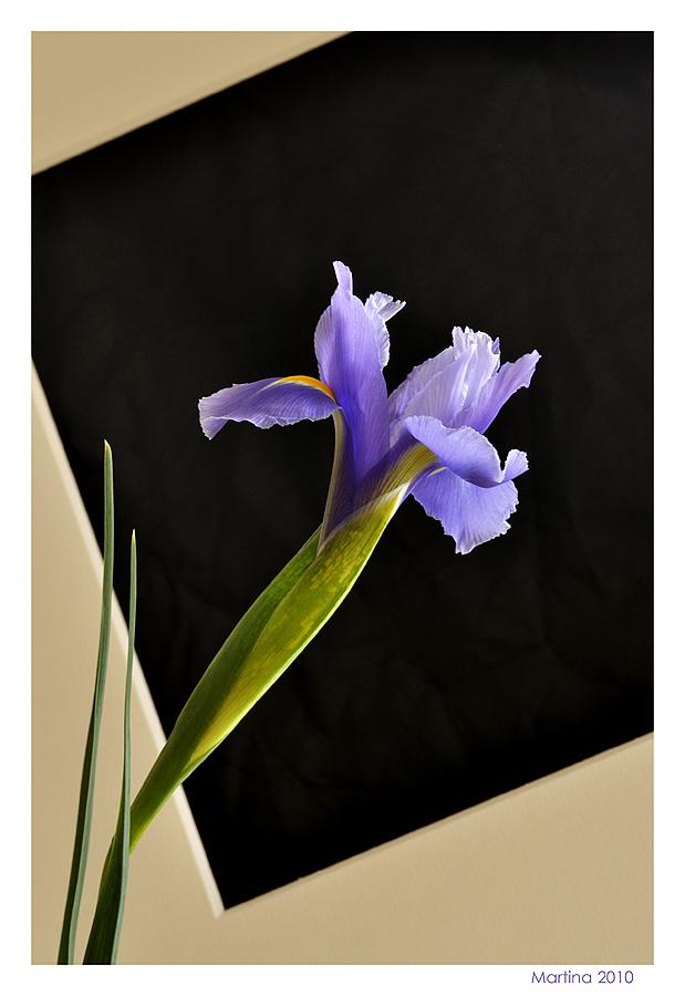 Iris con passepartout