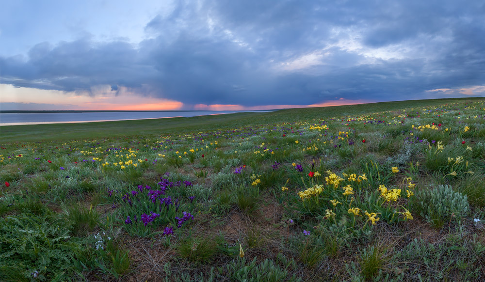 """""""Irises in the steppe"""""""