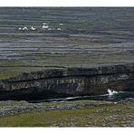 irish wilderness