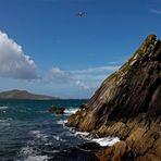 Irland 2011 - V - Blasket Islands