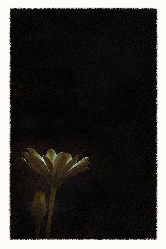 [iron_flower]