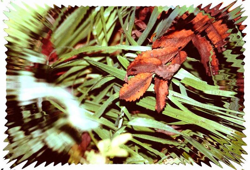 Is den schon Herbst?