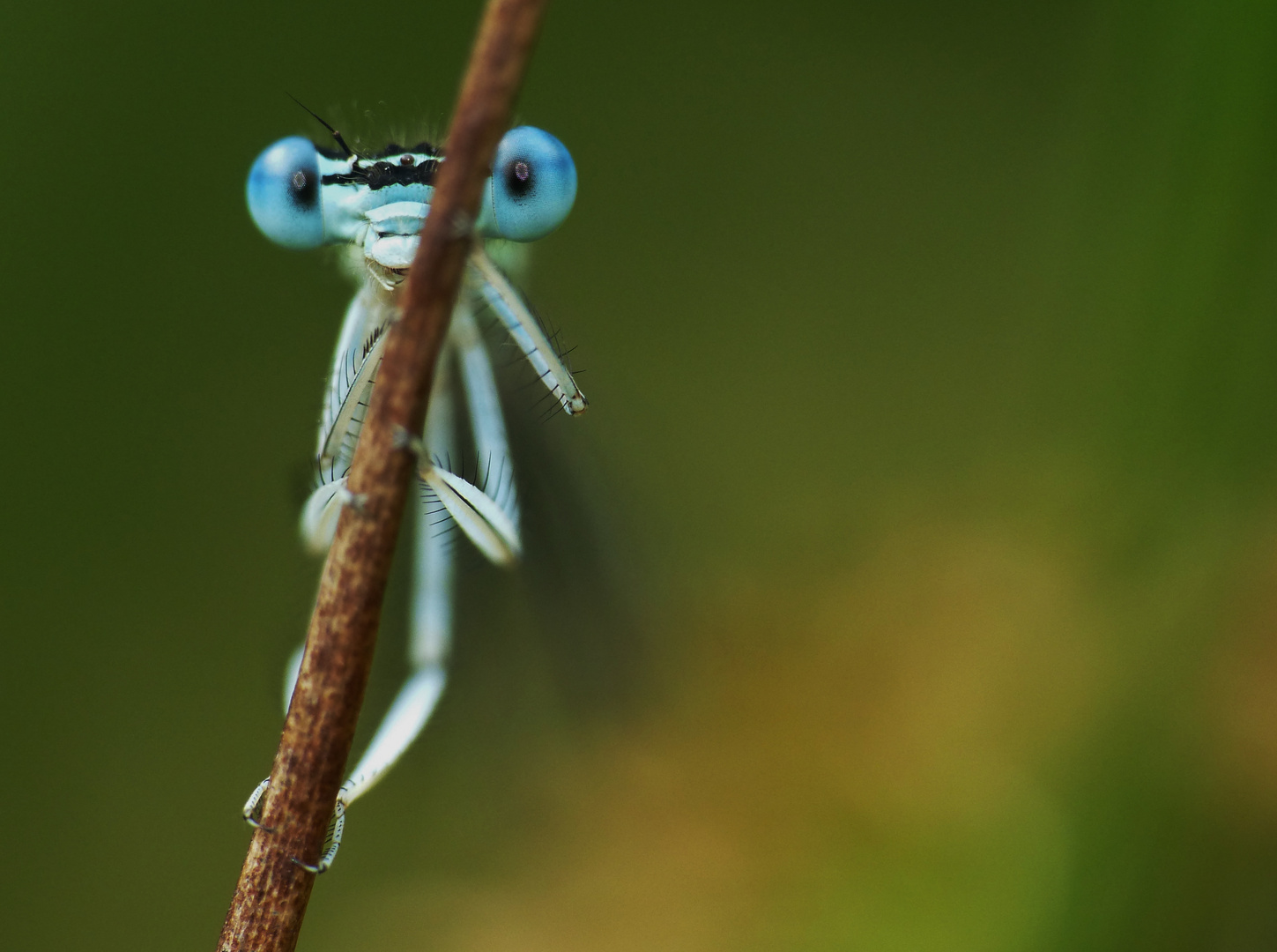 ...is watching you