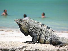 Isla Holbox- Yucatan Mexiko