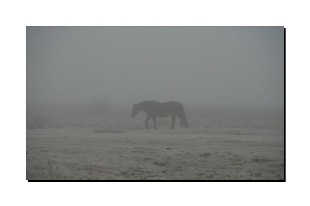 Isländer im Nebel