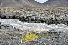 Island - die Schönheit karger Vegetation