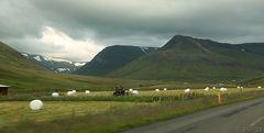Island im Juli: Schnee und Futter...