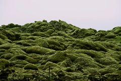 Island-Moos