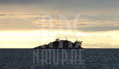 Island near ROVINJ