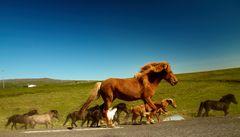 Island-Pferde bei Skalabrekka