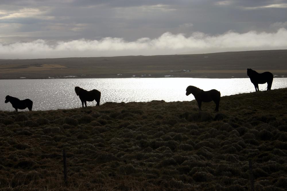 Islande 14