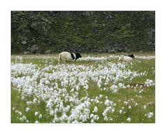 Islandsommer 2006 - #179