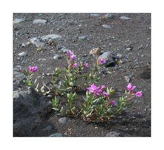 Islandsommer 2006 - #266