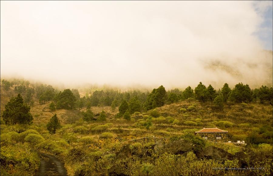 Isolée....sur les flancs du volcan..