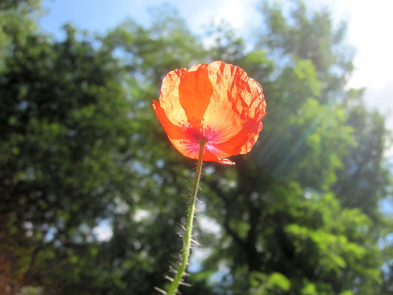 ..... ist auch nur eine Blüte
