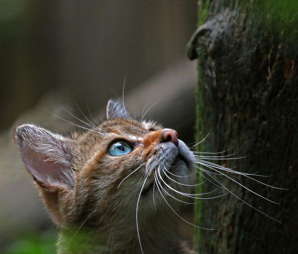 Ist da ein Vogel im Baum?