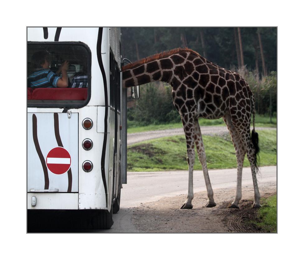 """""""Ist das hier der Bus in die Serengeti??"""""""
