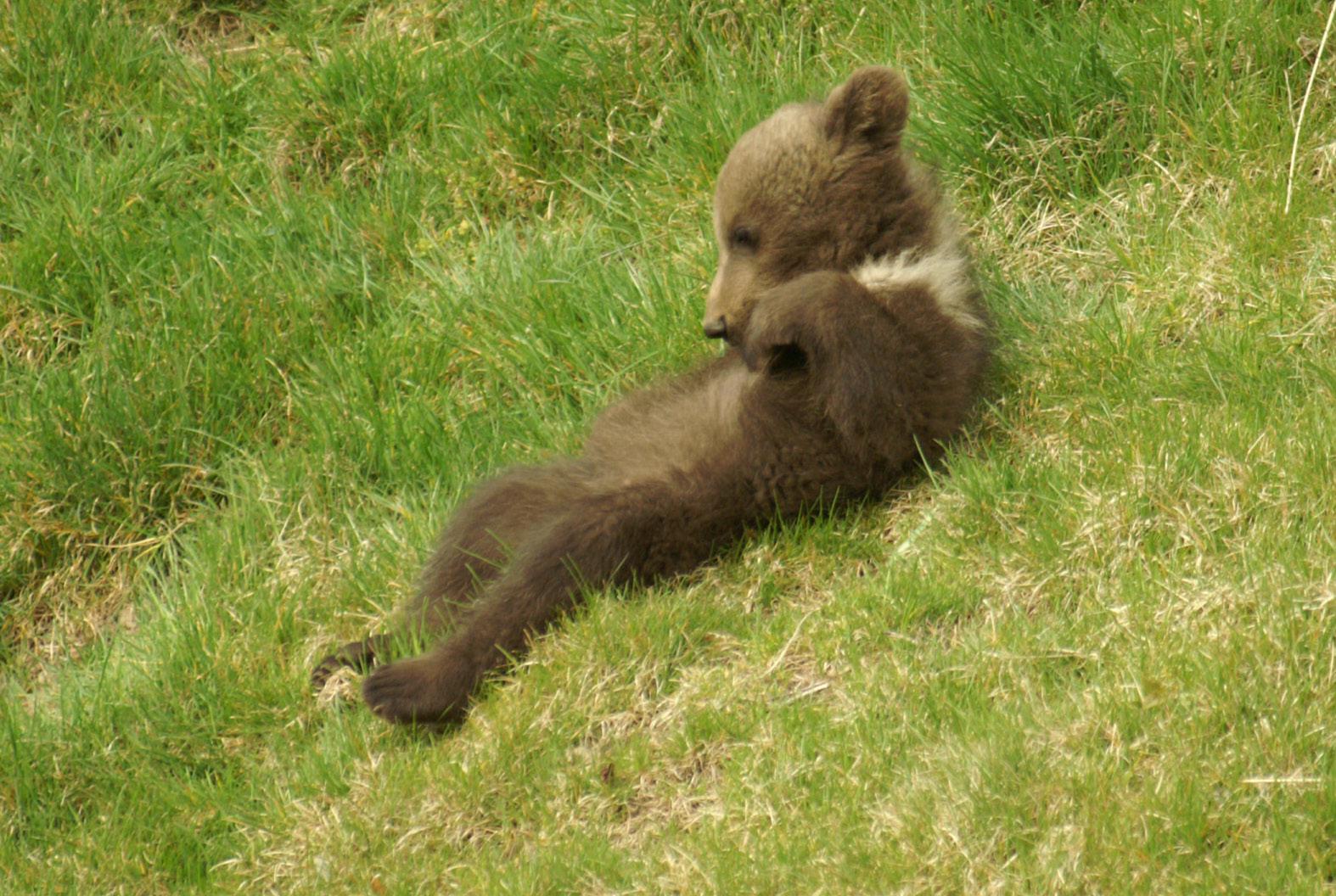 Ist das nicht ein süsser junger Bär
